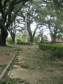 Natchez4Sept2008ParkBranchesMonument.jpg