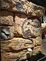 "National Museum of Ethnology, Osaka - Rock painting of ""dreaming"" on artificial rock - Arnhem Land in Australia - Made by Bobby Nganjmirra in 1986.jpg"