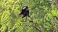 National Zoological Park Delhi 00000 17.JPG