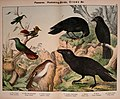 Natural history of the animal kingdom for the use of young people (Plate IX) (5974388055).jpg