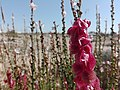 Nature for blinds 09.jpg