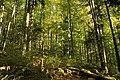 Nature reserve Ptaci stena in autumn 2011 (31).JPG