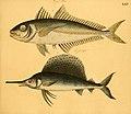 Naturgeschichte in Bildern mit erläuterndem Text (Taf. LXV) (6059214996).jpg