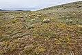Near Coyote Canyon - Flickr - aspidoscelis.jpg