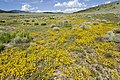 Near Coyote Canyon - Flickr - aspidoscelis (5).jpg