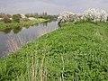Nene River - geograph.org.uk - 162057.jpg