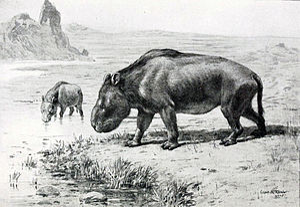 Nesodon - N. imbricatus restoration by Charles R. Knight, 1905