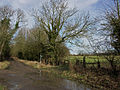 Nethercote Lane, Lewknor - geograph.org.uk - 123126.jpg