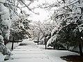 Neve a Cosenza marzo 2005 - panoramio.jpg
