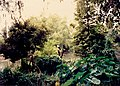 New Orleans Audubon Park October 1986 02.jpg