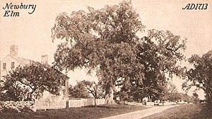 Newbury, Massachusetts - Newbury Elm c. 1910