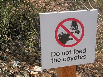 A sign discouraging people from feeding coyotes, which can lead to them habituating themselves to human presence, thus increasing the likelihood of attacks No Feeding.jpg