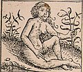 Nuremberg chronicles - Strange People - Androgyn (XIIr).jpg