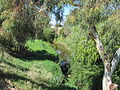 OIC torrens river near hindmarsh cemetery 1.jpg