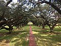 Oak Alley Plantation Views 10.jpg