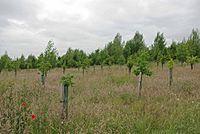 Oakfield Wood - geograph.org.uk - 1364448.jpg