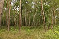 Obersteinbeck Naturschutzgebiet Am Kaelberberg 07.JPG
