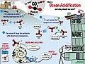 Ocean Acidification Infographic.jpg