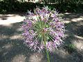 Odessa Main Botanical garden 012.jpg