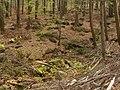 Oldřichovská vrchovina, Oleška 01.jpg