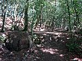 Old quarry in the woods - geograph.org.uk - 510113.jpg
