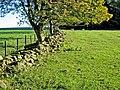Old wall and field boundary near Bavington Mount - geograph.org.uk - 271419.jpg