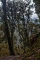 On the trekking trail to Ghorepani - panoramio (4).jpg