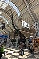 Ord brachiosaurus.jpg