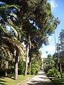 Orto botanico di Napoli 213.JPG