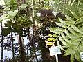 Orto botanico di Napoli 43.jpg