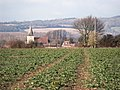 Over the brassica fields to Bosham, West Sussex - geograph.org.uk - 1761595.jpg