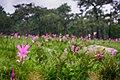 Pa Hin Ngam National Park (4).jpg