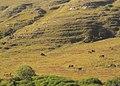Padang Rumput dan Kuda Sandalwood.jpg