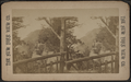 Palisades, Hudson River, by New York View Co..png