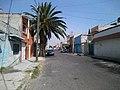 Palmera en Calle Pensamiento - panoramio.jpg