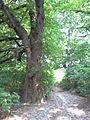 Park dworski Czachórskich (2).jpg