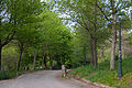 Parque Forestal de Beade (16682889483).jpg