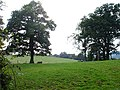 Pasture near Trelydan Farm - geograph.org.uk - 570669.jpg