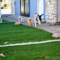 Pawliday Inn Pet Resort 21.JPG