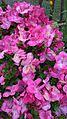 Peace pagoda garden photo.jpg