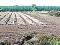 Peat drying - geograph.org.uk - 902565.jpg