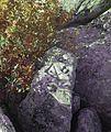 Petroglyph Belogradchik BG.JPG