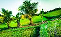 Photo From Paddy Field.jpg
