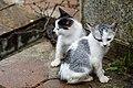 Phuket Thailand Feral-cats-at-Wat-Chalong-02.jpg
