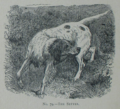 Picture Natural History - No 79 - The Setter.png