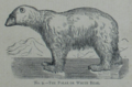 Picture Natural History - No 9 - The Polar or White Bear.png