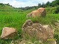 Pierre sacrée au milieu des rizières à Fonohasina. Au fond, le puit sacré de Ralambo et des Andriandoriamanjaka.JPG