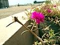 Pink Flower (241806043).jpeg