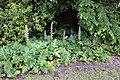 Pisa, orto botanico, orto nuovo, arboreto, acanto in fiore.jpg