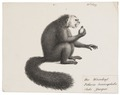 Pithecia leucocephala - 1809-1845 - Print - Iconographia Zoologica - Special Collections University of Amsterdam - UBA01 IZ20200230.tif